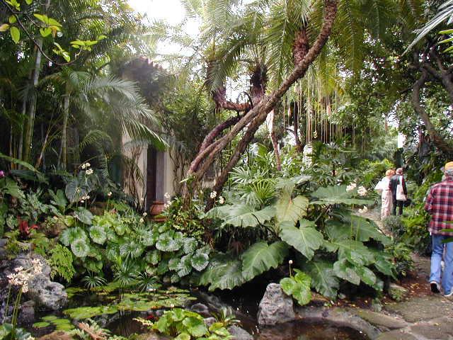 Pinterest the world s catalog of ideas for Jungle garden design ideas